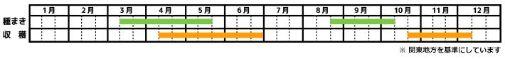 大根_栽培カレンダー
