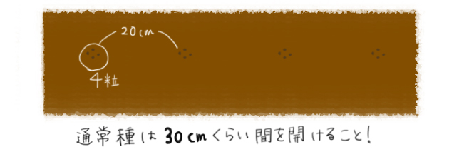 大根_種まき
