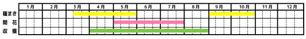 ディル_栽培カレンダー
