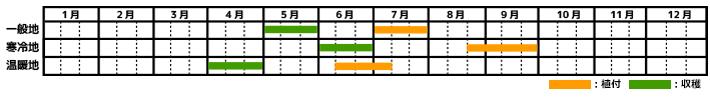枝豆の栽培カレンダー