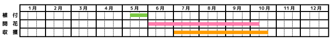 ピーマン_栽培カレンダー
