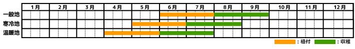 きゅうり_栽培カレンダー