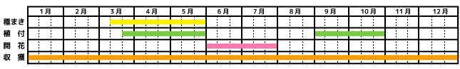 レモンバーム_栽培カレンダー