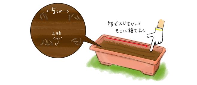 リーフレタス_種まき