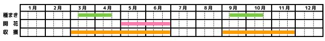 マジョラム_栽培カレンダー