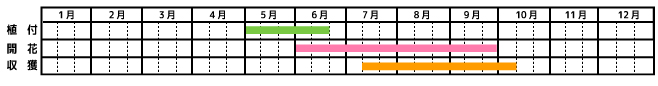 オクラ_栽培カレンダー