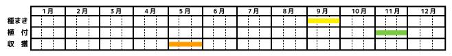 玉ねぎ_栽培カレンダー