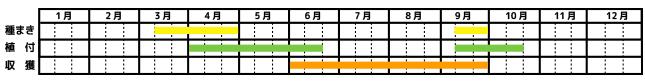 オレガノ_栽培カレンダー