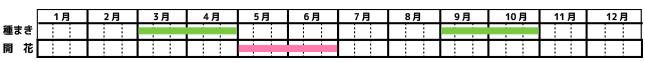 パクチー_栽培カレンダー