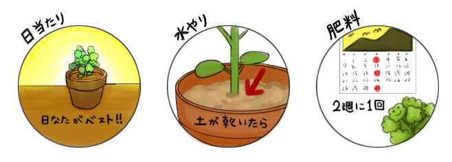 唐辛子_栽培のポイント