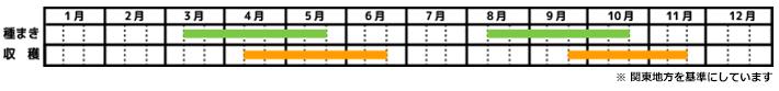 ラディッシュ_栽培カレンダー