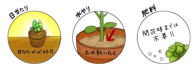 いんげん_栽培のポイント