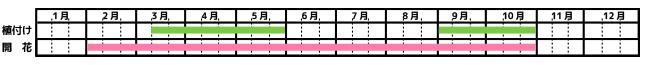 ローズマリー栽培カレンダー
