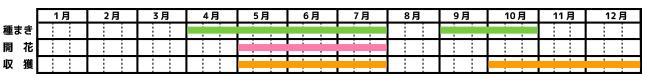 ルッコラ_栽培カレンダー