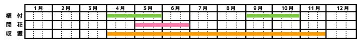 コモンセージ_栽培カレンダー