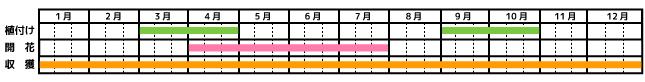 タイム_栽培カレンダー