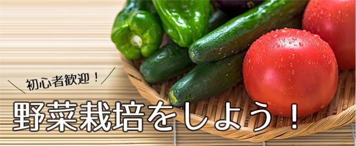 野菜の育て方―カブ