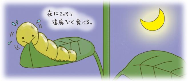 ヨトウムシ_生態